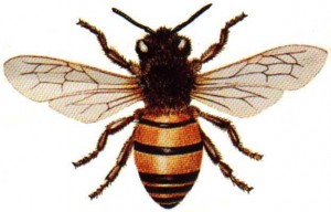 This is a bee